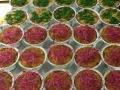 Sformatini tricole